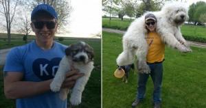 20 kiskutya, aki nem hajlandó elfogadni a tényt, hogy már nagy kutya