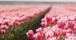7 lenyűgöző tény a virágokról
