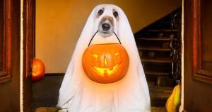 13 imádnivaló kutya szellem jelmezben, aki majdnem megijesztet minket