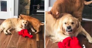 20 fotó, ami bizonyítja, hogy minden jó kutyának van egy gonosz, sötét oldala