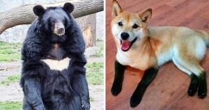 25 mókás bundával megáldott állatka, akik élő bizonyítékai, hogy a természetnek is van humorérzéke
