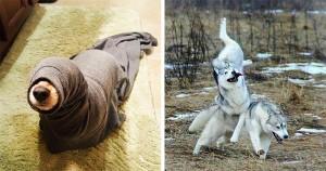 20 látványos kutyabaki, amin nem lenne szabad nevetni, de nem lehet megállni