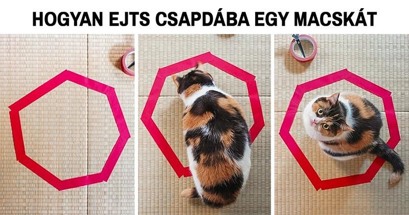 20 fotó, ami bizonyítja, hogy a macskalogika semmi máshoz sem fogható