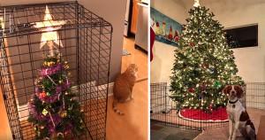 20 ember, aki mindent elkövetett, hogy megóvja karácsonyfáját a pimasz házikedvencektől