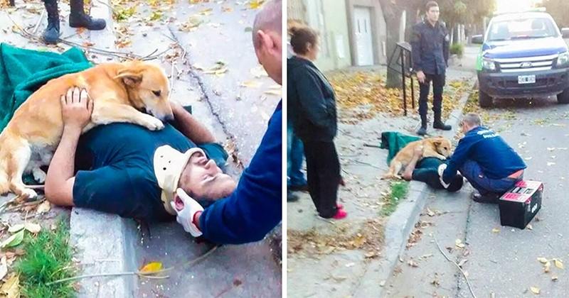 20 fotó, ami bizonyítja, hogy a kutyák törődése semmi máshoz sem fogható