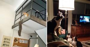 19 jópofa macskás kép, amit meglátva nem fogod tudni abbahagyni a nevetést, amíg el nem kattintasz