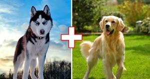 Amikor két különböző fajta kutyus összeszűri a levet, ez lesz az eredmény: Gyönyörű szép keverék kutyák